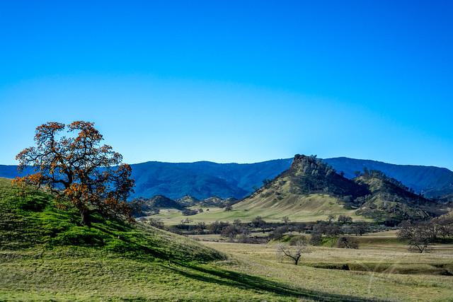 California-roadtrip-nature-lone-tree-overlook-hilltops-clear-sky.jpg