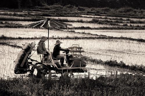 Rice Transport-Asian