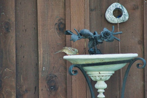 2019-01-22 - Nature Photography - Our Backyard Friends, Set 2