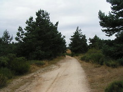 20080906 31555 1007 Jakobus Bäume Weg - Photo of Serverette