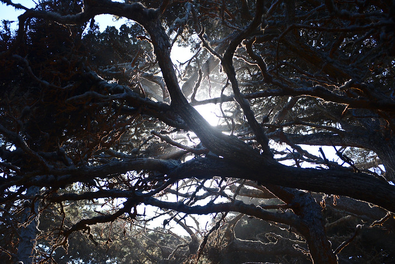 Sunlight through canopy, Cypress Grove trail, Point Lobos