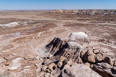 View of the vast arid dry desert of Petrified Forest National Park and the Painted Desert of Arizona in Four Corners area. Room for text