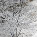 Snow Covered Trees, Lurie Garden, Chicago, November 26, 2018 18 full by stew says ישעיה טשערויין