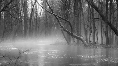 ridley creek water fog mist winter december trees atmosphere nature landscape bleak pennsylvania iphone
