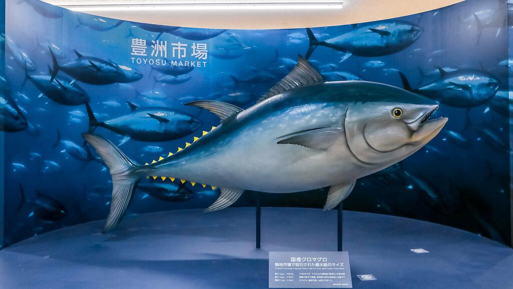 tokyo-toyosu-fish-market-odaiba-alexisjetsets-6