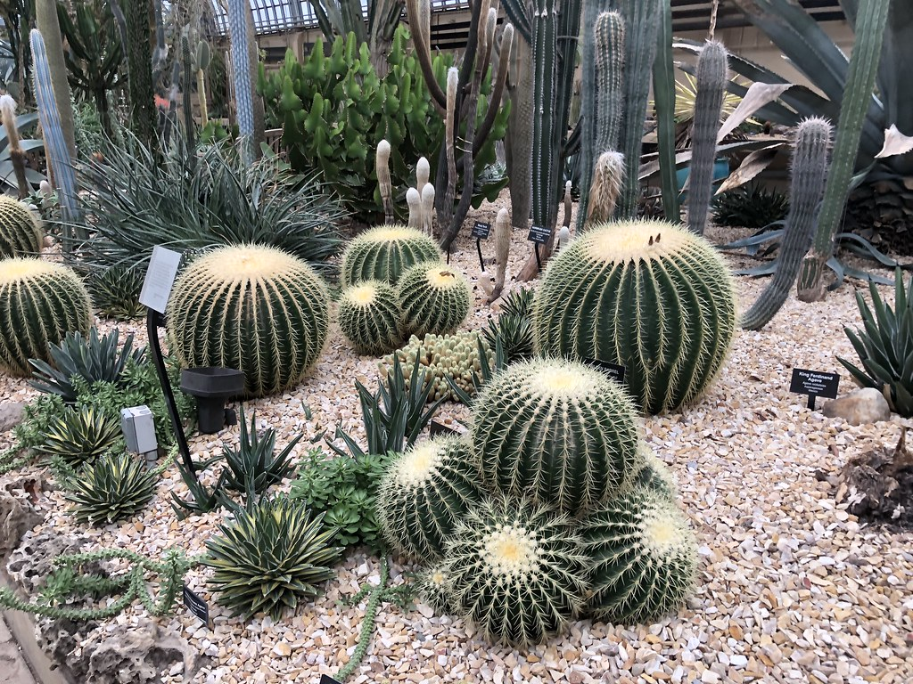 The Garfield Conservatory | 2 Days in Chicago