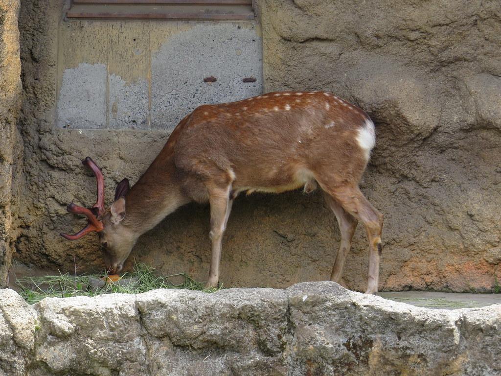 TOKYO ZOO上野動物園(兩光媽咪柳幼幼) (9)