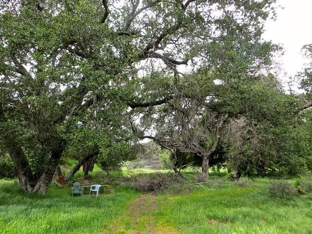 oak grove before