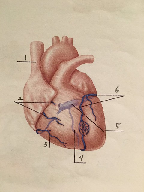 Heart Anatomy Quiz 6