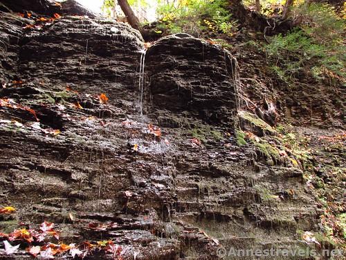 Seeps near the Third Falls in Barnes Gully, Onanda Park near Canandaigua, New York