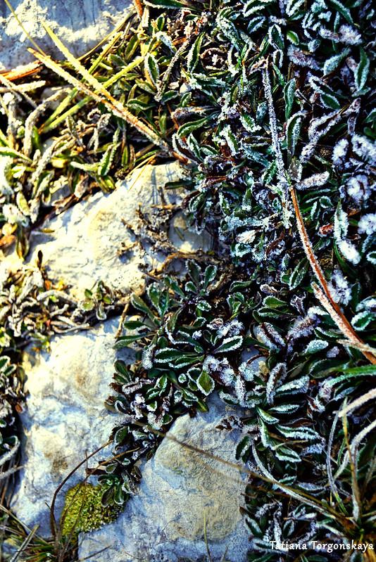 Камни дороги и растения, покрытые инеем