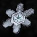 Snowflake-a-Day No. 11 by Don Komarechka