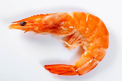 Cooked shrimp close-up
