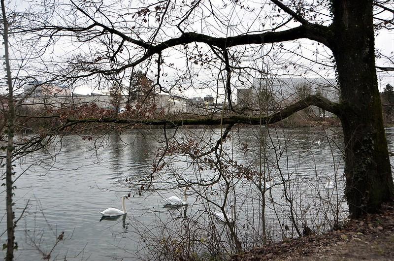Swans 06.12 (8)