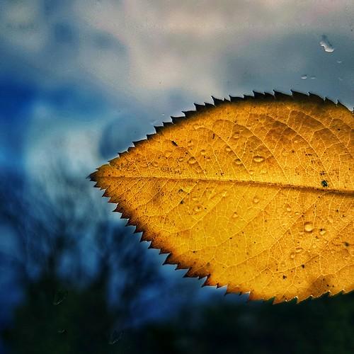 Golden Leave