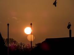 Red sunrise - lens flare.