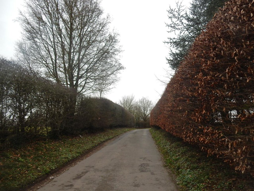 Twixt hedges Shiplake to Henley