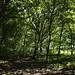 Notton Wood Nature Reserve (73)