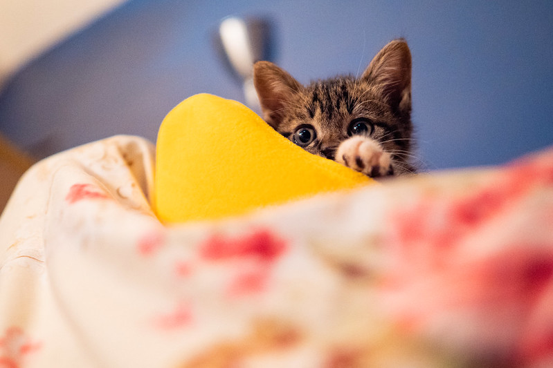 Meow|喵