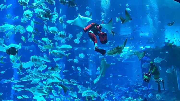 Christmas at S.E.A Aquarium