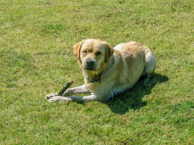 Fotos de animales de todo tipo incluyendo mascotas que más te gustan - Página 14 31376233237_99ce36d48e_z
