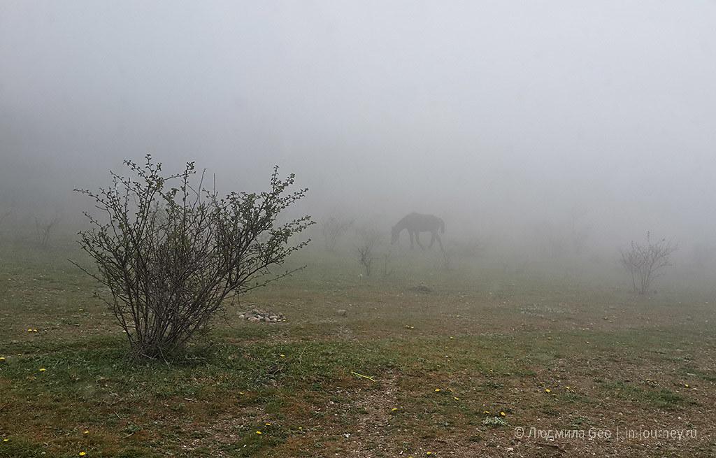 конь в тумане около Долины Привидений