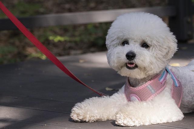 散歩マナーを守って飛びつかずに静かにしている犬