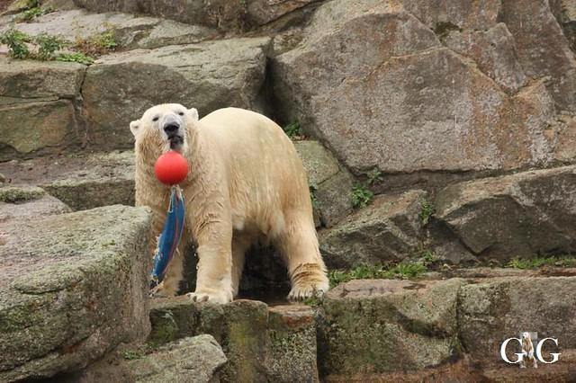 Besuch Zoo Berlin 11.11.201817