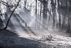 Foggy sunbeams