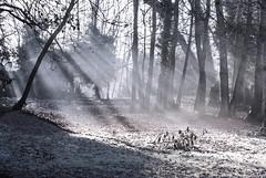 Foggy sunbeams