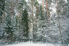 Winter | Kleboniškis | Kaunas