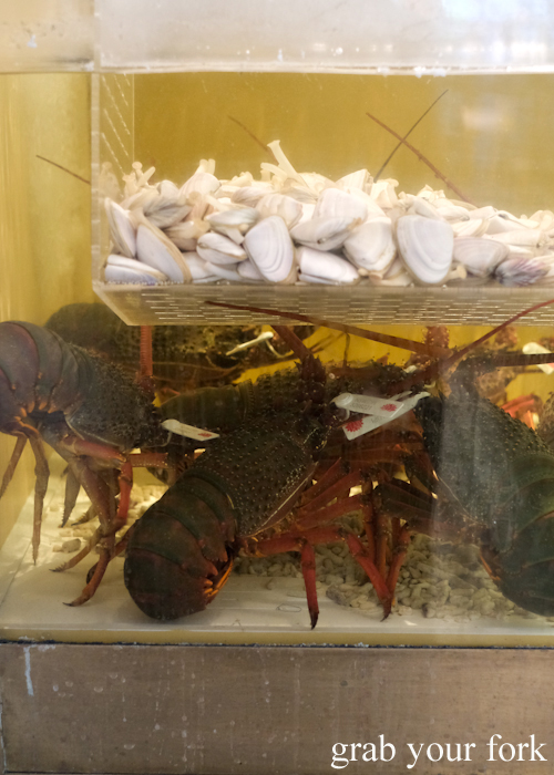 Live seafood tank with Eastern rock lobsters and pipis at Bert's in Newport by Merivale