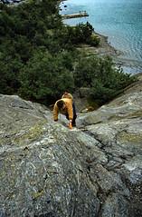 Norwegen 1998 (212) Nigardsbreen