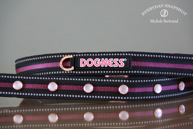 Dogness LED Leash – Review