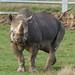 Yorkshire Wildlife Park...    10.12.2018 307