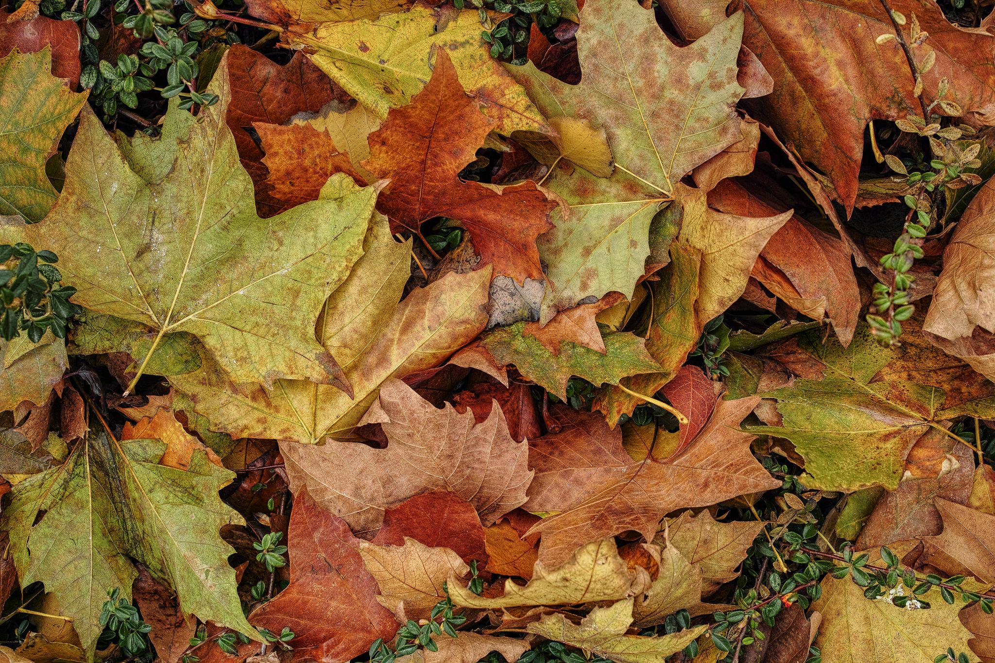 """thème du jeu de Novembre """"Couleurs d'automne"""" 45767038852_7ad662f097_k"""