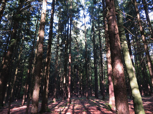 20170930 03 106 ostbay Wald Bäume