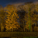 night_wood_panno_entw16 by mathias-kolodzie
