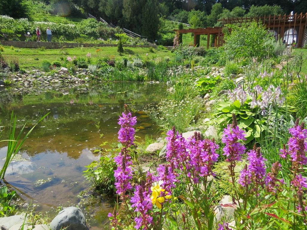 Пруд в патриаршьих садах