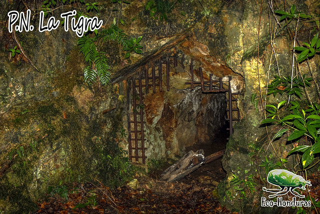 tigra10