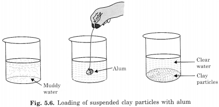 NCERT Solutions for Class 6 Science Chapter 5 Separation of Substances 5