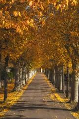 Rue d'automne.