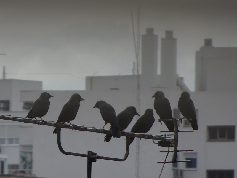 The Birds from my window