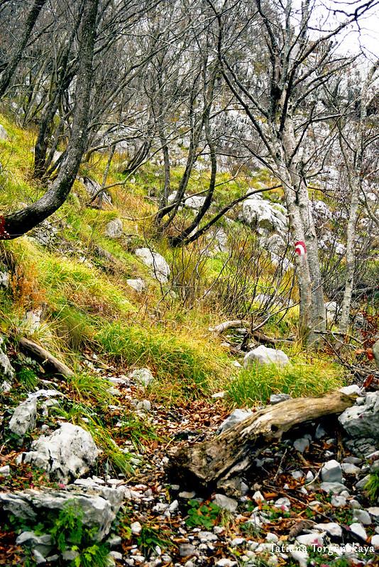 Буковый лес на склоне горы