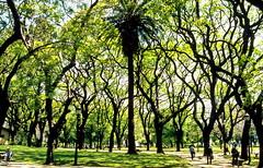 Buenos Aires Plaza de San Martín