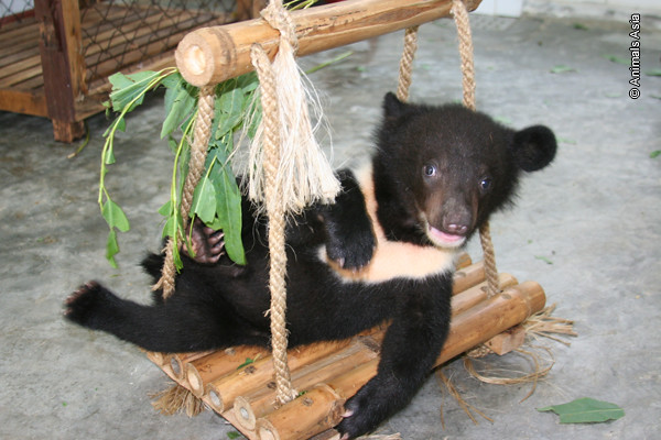 Maggie on swing as cub