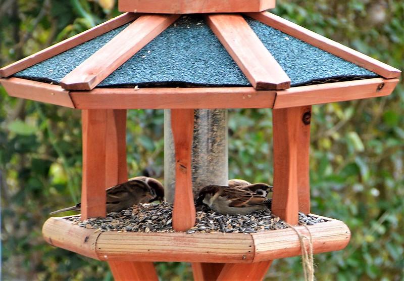 Sparrows 17.01 (1)