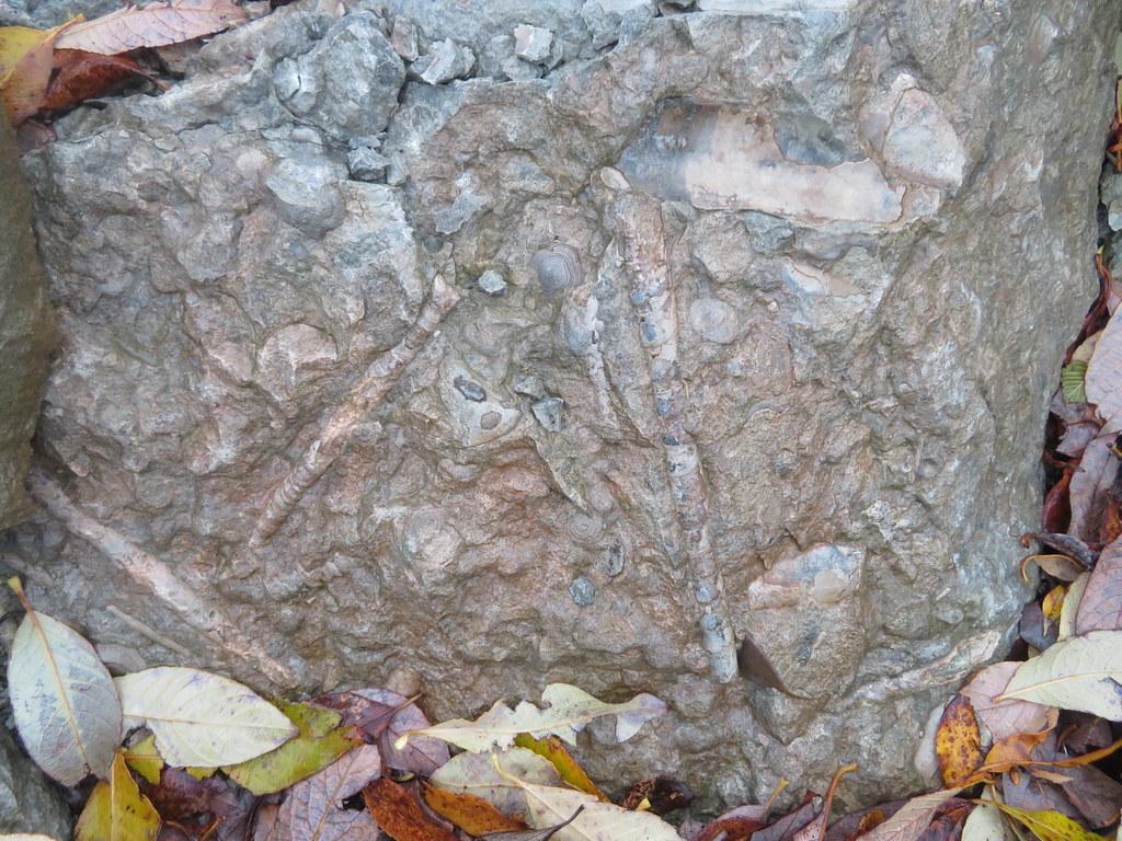 Harku karjäär / Harku limestone quarry, Estonia   www flickr
