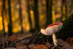 champignon et bokeh