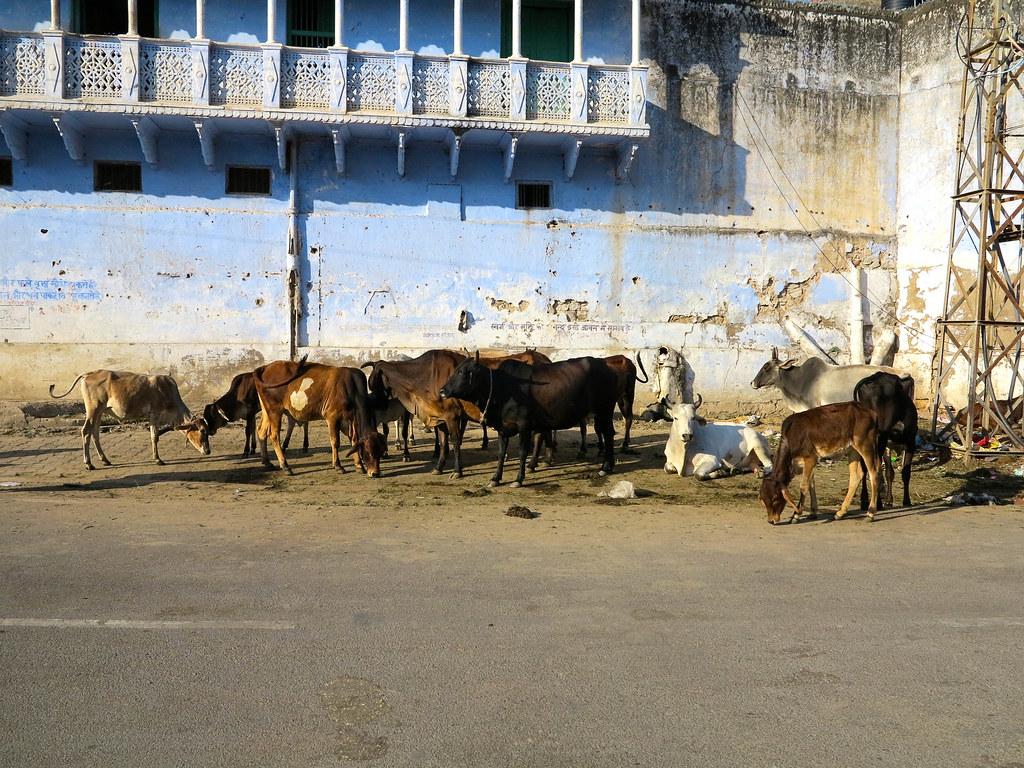 Calles del centro de Pushkar